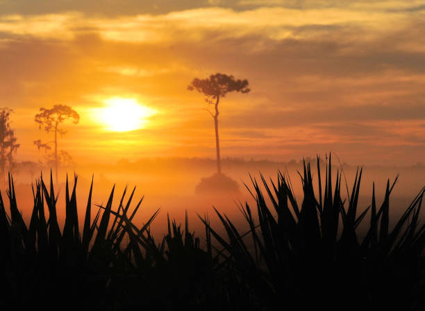 sunrise fog - kissimmee stock photos and pictures