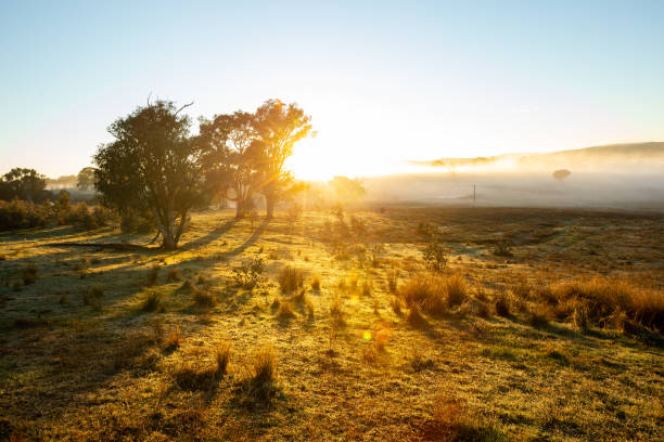 A sunrise in a field with a heavy fog bank on the horizon stock photo