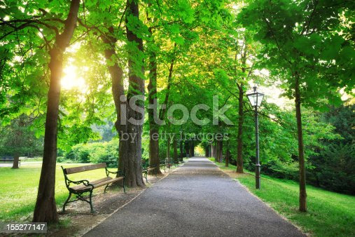 Green avenue - sunrise in a city park (Graz, Austria).