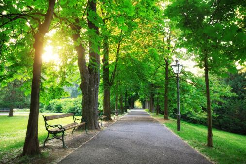 Green avenue - sunrise in a city park (Graz, Austria).