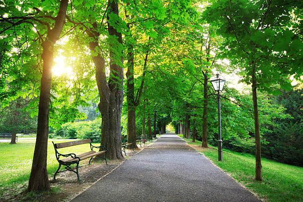 Sunrise In a Green Park stock photo