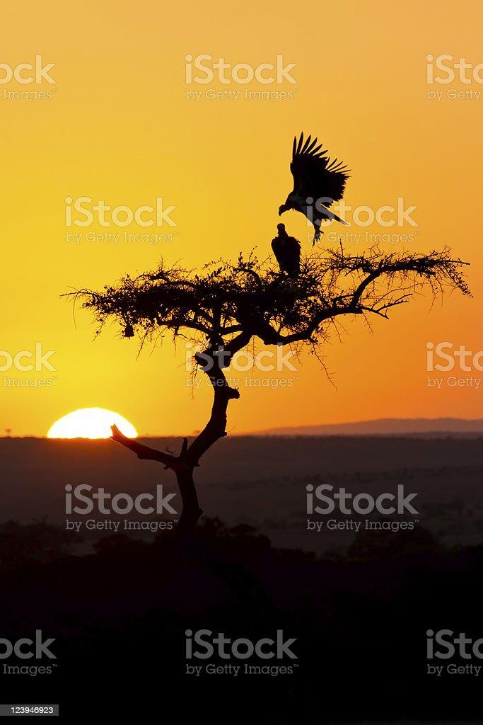 Sunrise in africa stock photo