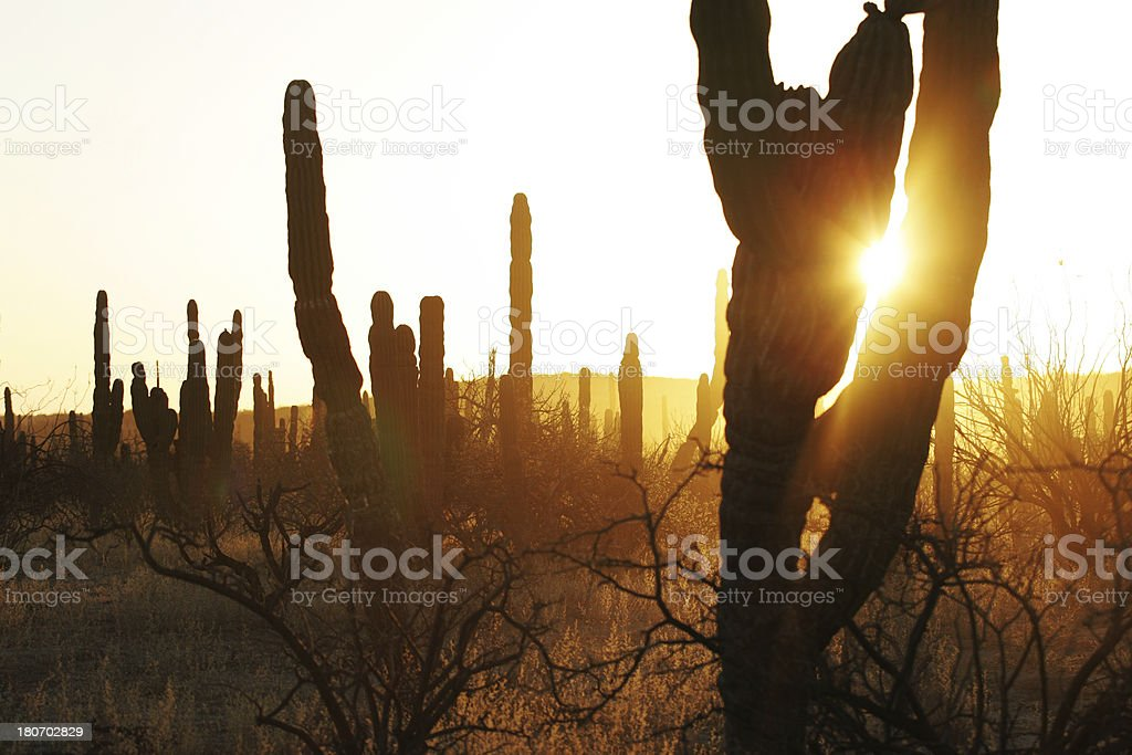 Sunrise in Baja, Mexico royalty-free stock photo