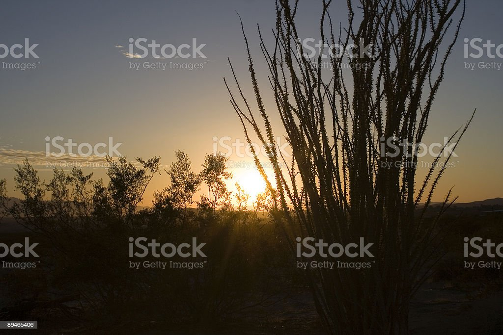 Sunrise in Desert royalty-free stock photo