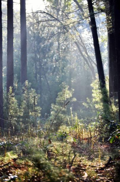 Lever du soleil dans la forêt. - Photo
