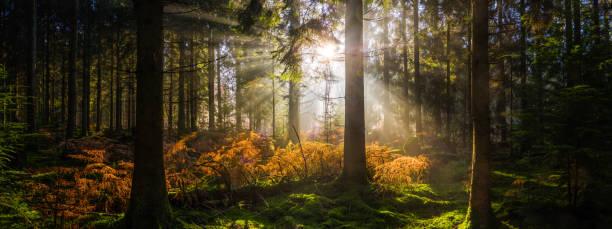 Sonnenaufgang im idyllischen Wald lichtet goldenen Strahlen und beleuchtet Waldpanorama – Foto