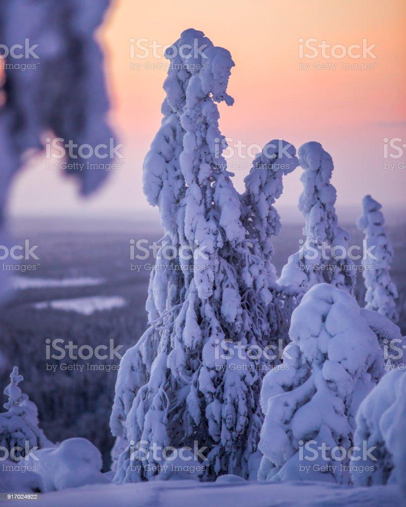 Sonnenaufgang in Lappland. – Foto