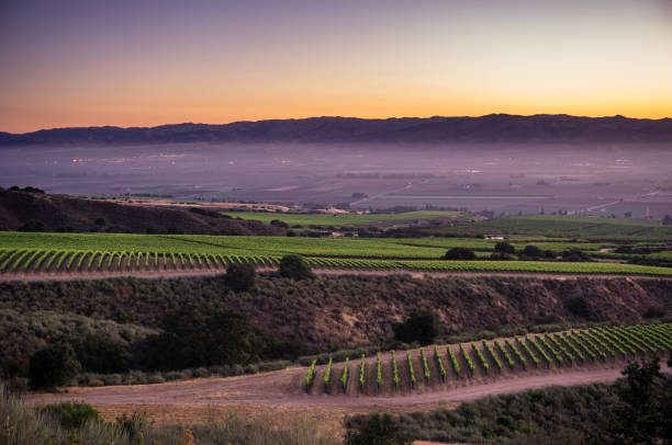 Sunrise in Santa Lucia Highlands Vineyard stock photo