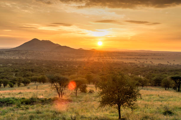 Sunrise in Serengeti national park, landscape with sunlight effect, Africa. stock photo