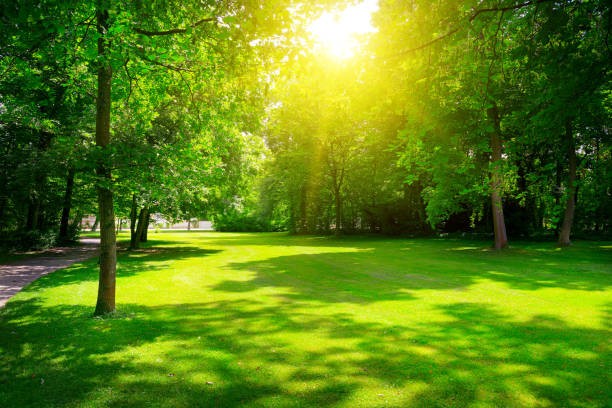 Sunrise in summer beautiful park. stock photo