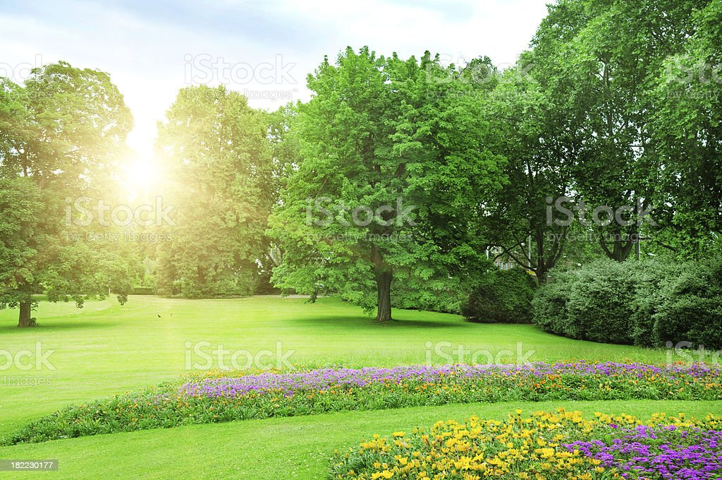 sunrise in summer park stock photo