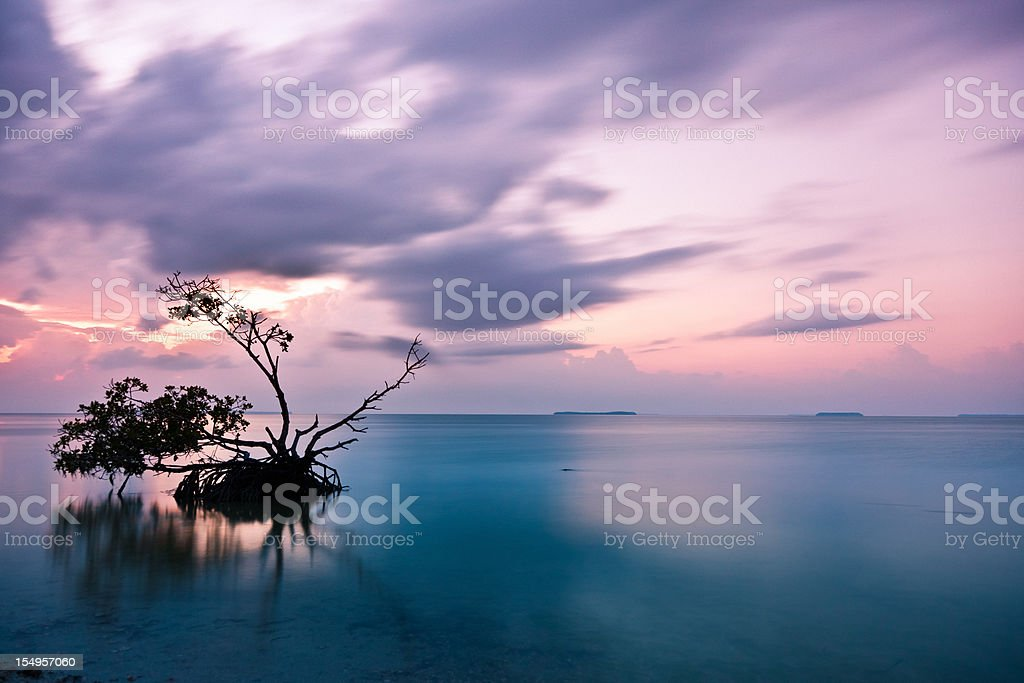 Sunrise in the Everglades National Park, Dramatic Sky, Florida royalty-free stock photo