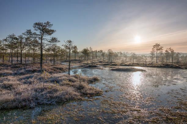 Sunrise in the frozen bog stock photo