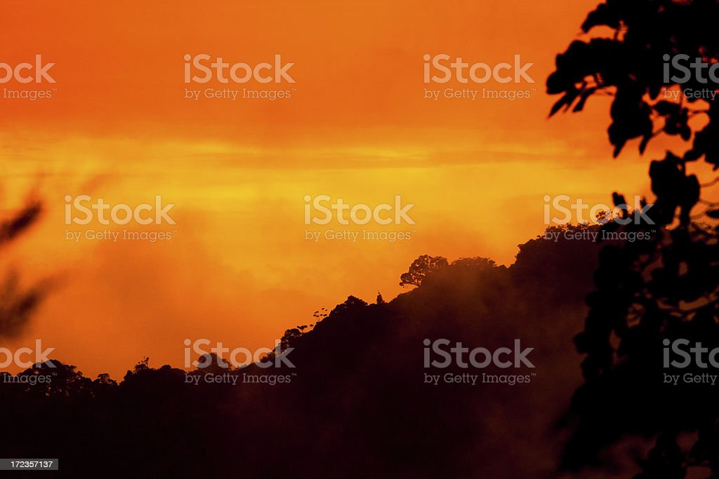 Sunrise in the Jungle royalty-free stock photo