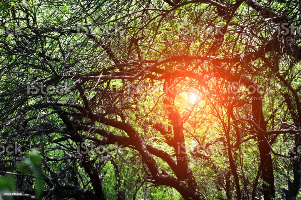Sunrise In The Nature royalty-free stock photo
