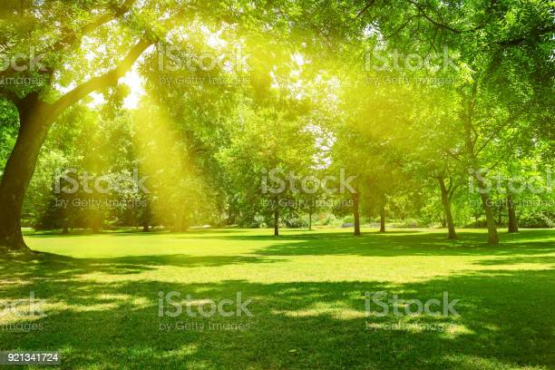 Photo of Sunrise in the park