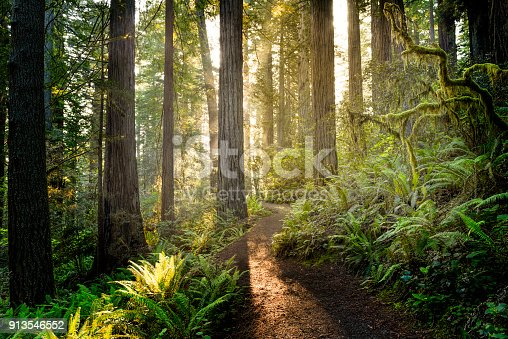 Sunrise in Redwood National Park