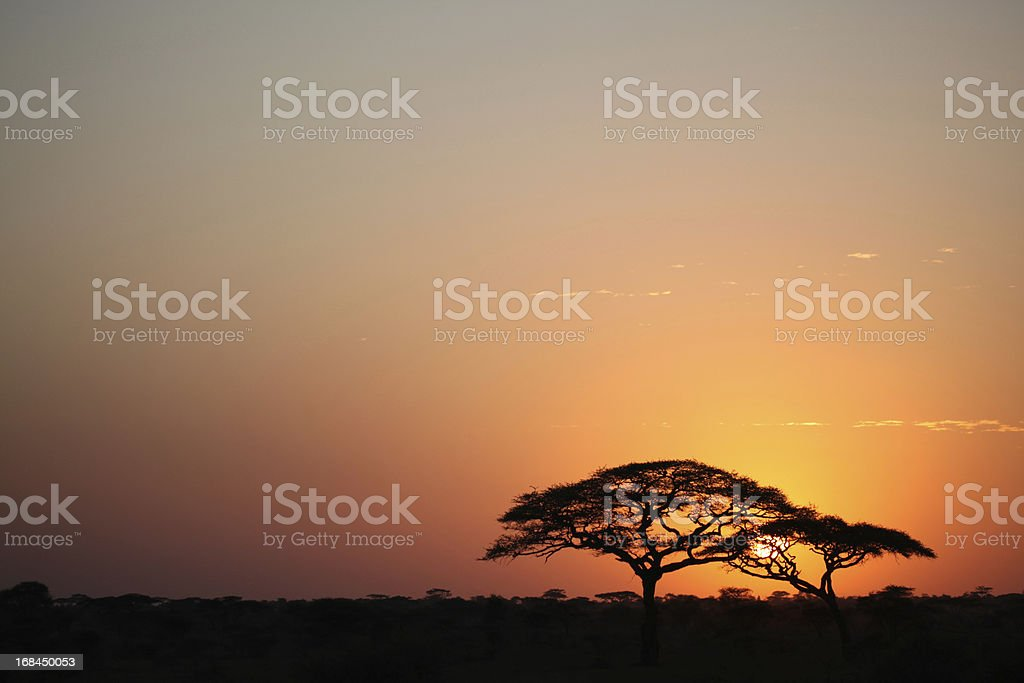 Sunrise in the Serengeti in Africa stock photo