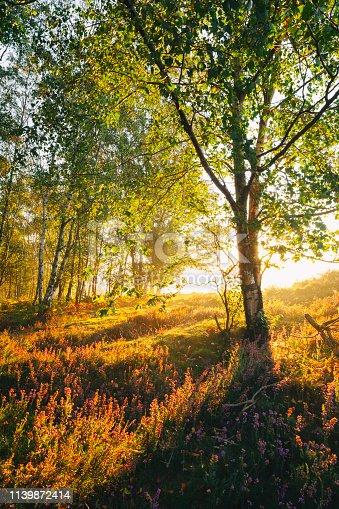 A bright sunrise in the Surrey Hills, UK.
