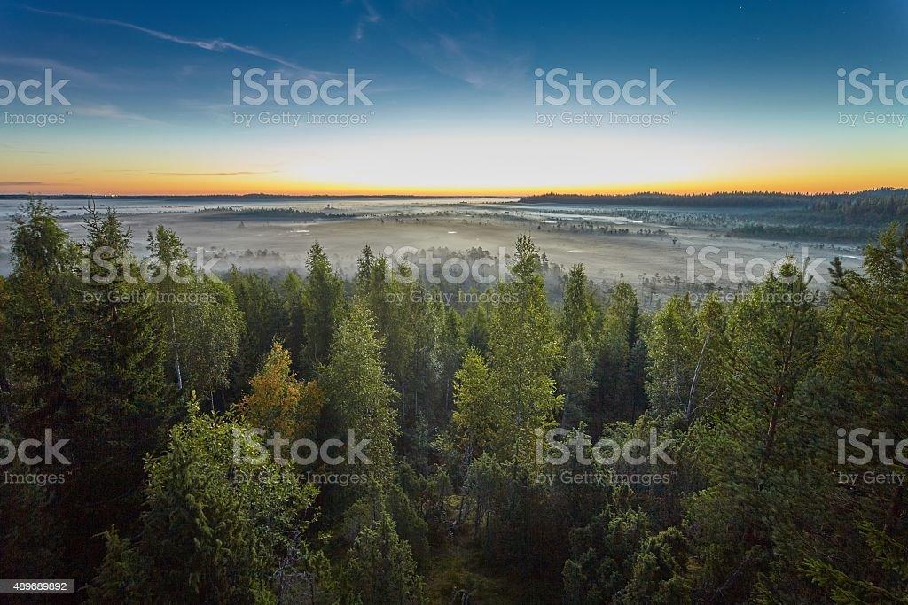 Sunrise in the swamp stock photo