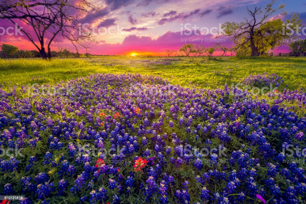Sunrise in the Texas Hill Country stock photo