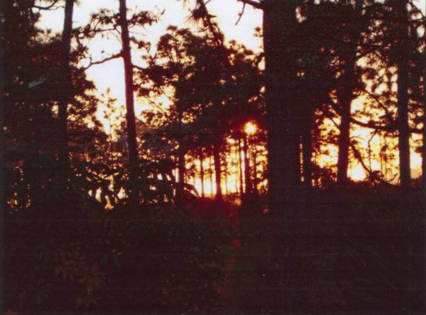 sonnenaufgang in den wäldern von florida - palmwedel stock-fotos und bilder