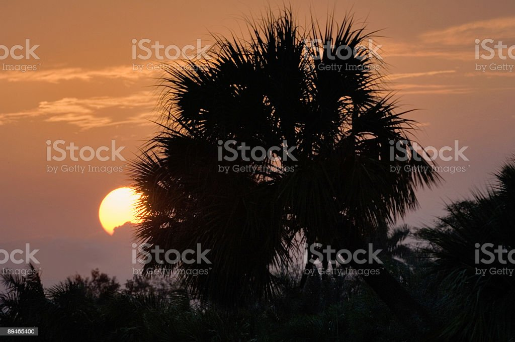 sunrise in tropical florida royalty-free stock photo