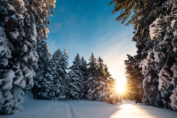 sunrise in winter forest - december stock photos and pictures