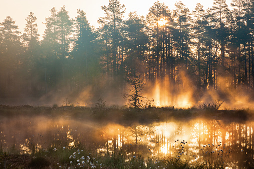 Sunrise in woods
