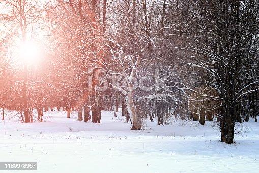 sunrise landscape winter park trees