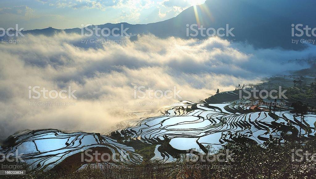 Sunrise of terraced fields royalty-free stock photo
