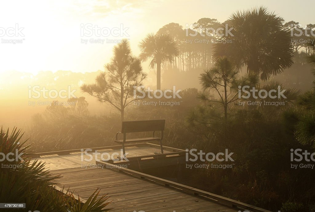 Sunrise on a Foggy Morning in a Florida Swamp royalty-free stock photo