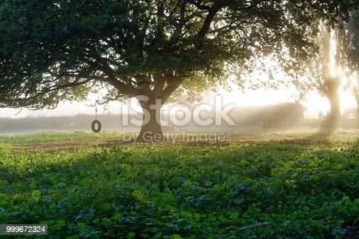 Rural scene on a misty morning at dawn