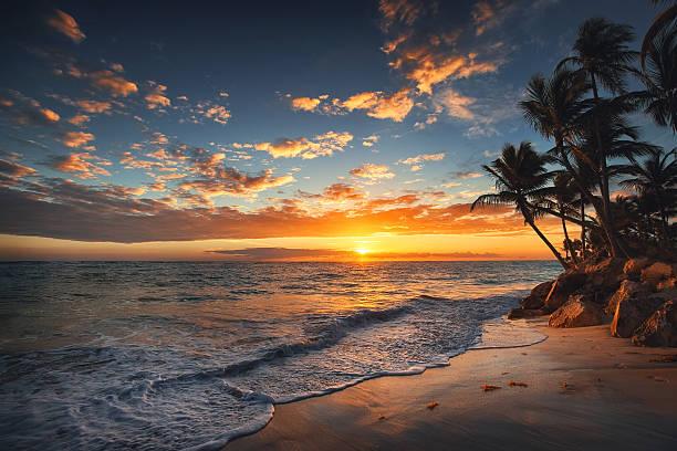 восход солнца на тропическом острове. пальмы на песчаном пляже. - sunset стоковые фото и изображения