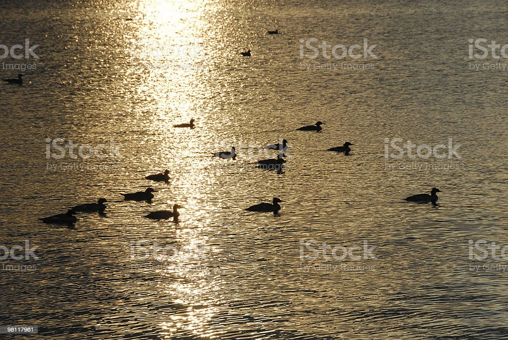 Sunrise on Birds royalty-free stock photo