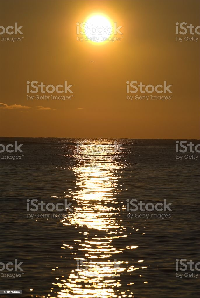 Sunrise on Black Sea with seagull silhouette stock photo