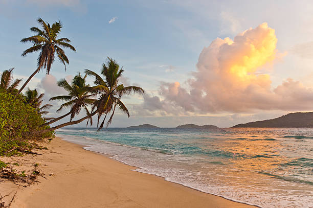 sunrise on deserted tropical island beach palm trees ocean surf - desert island stock photos and pictures