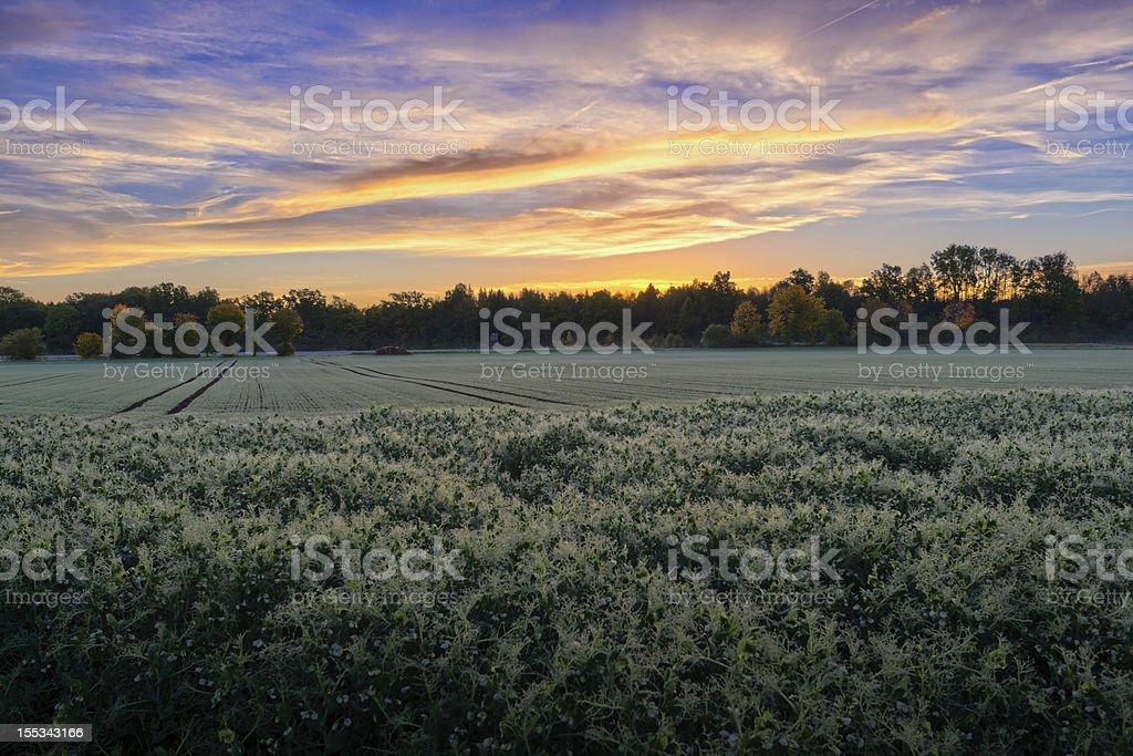 Sunrise on Fields stock photo