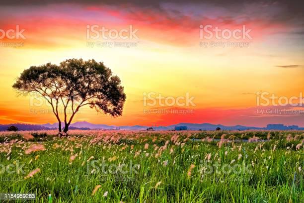 Sunrise on hwaseong suseom vd702 picture id1154959283?b=1&k=6&m=1154959283&s=612x612&h=s4iwcvxmzpaivzmafgj8g8lpkwrvdgksrefguucaggy=