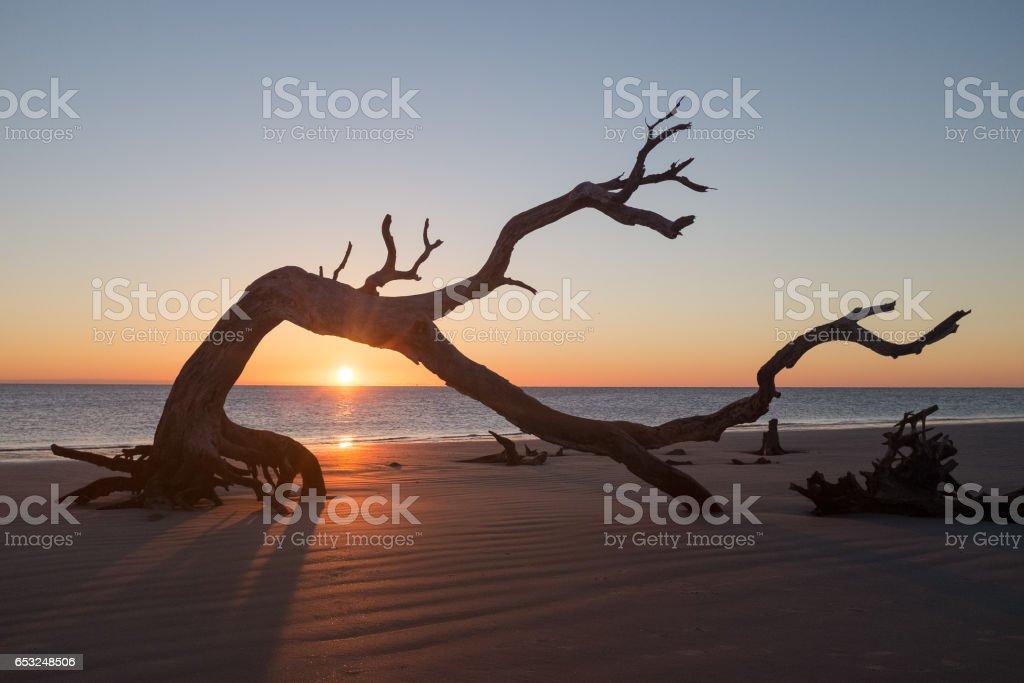 Sunrise on Jekyll Island Driftwood Beach stock photo