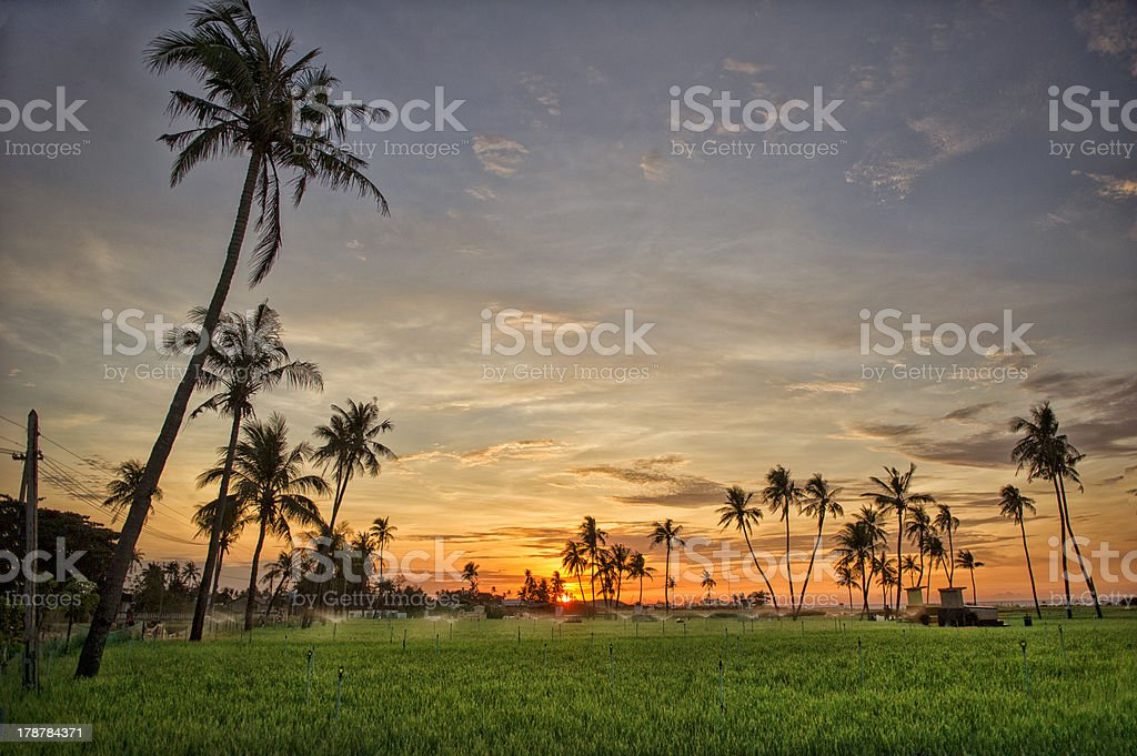 Sunrise on Lyson Island with palm Trees stock photo