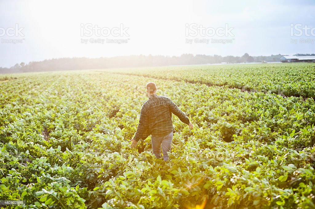 Sunrise on the farm, man working thru crop field stock photo