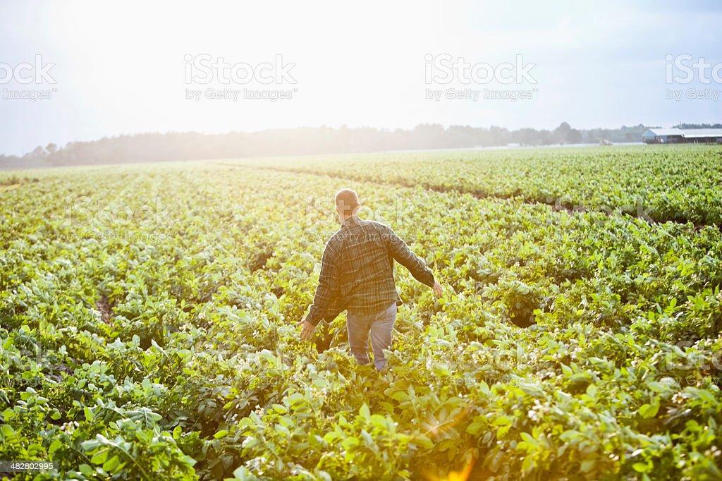 Alba nella fattoria, uomo lavorando a campo coltivato - foto stock