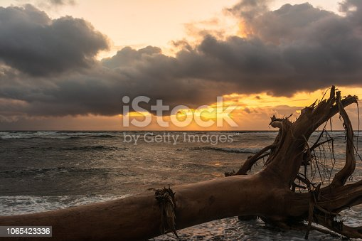 Dead tree on the beach at sunrise in Waipouli coast, Kauai, Hawaii
