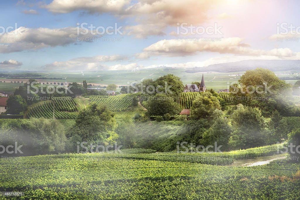Sunrise on vineyard , Montagne de Reims, France stock photo