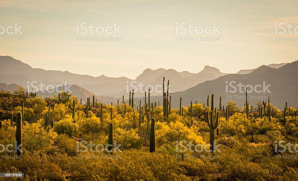 Sunrise Organ Pipe Cactus National Monument Arizona stock photo