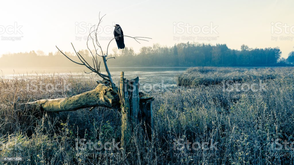 Sunrise over a misty pond with broken tree trunk and raven stock photo
