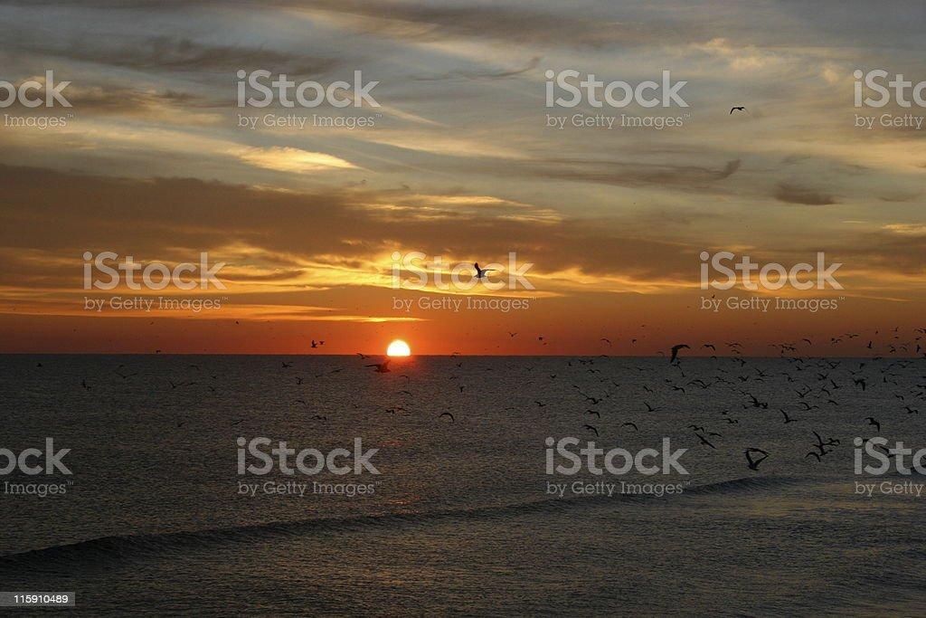 Sunrise over Daytona with Birds 5 stock photo
