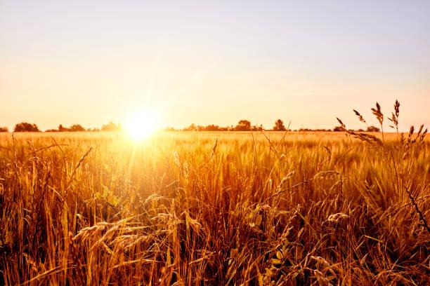 Sonnenaufgang über Feld – Foto
