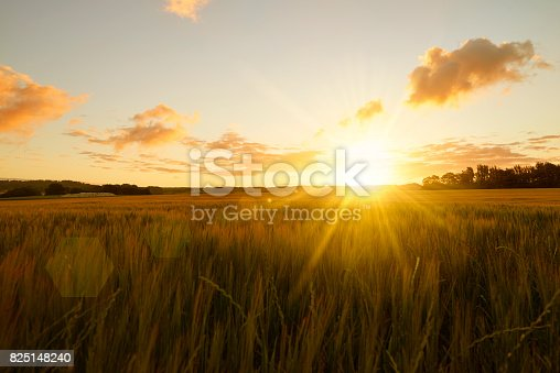 istock Sunrise over field 825148240